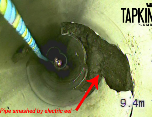 Beware of Electric Eel Damage to Toilet Pipe Found on Gold Coast